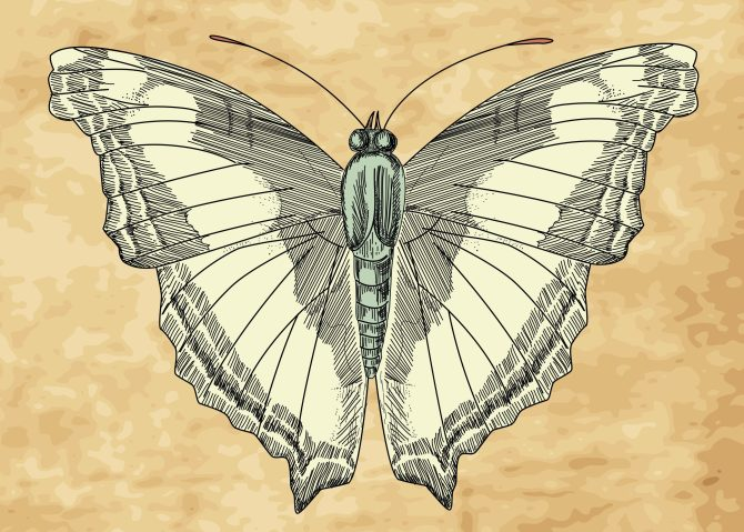 vintage-butterfly_zyEH0ddO