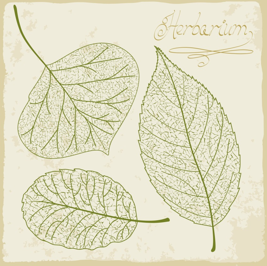 vector-leaf-skeleton-set_MymKIlPO