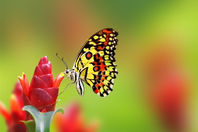 butterfly on m