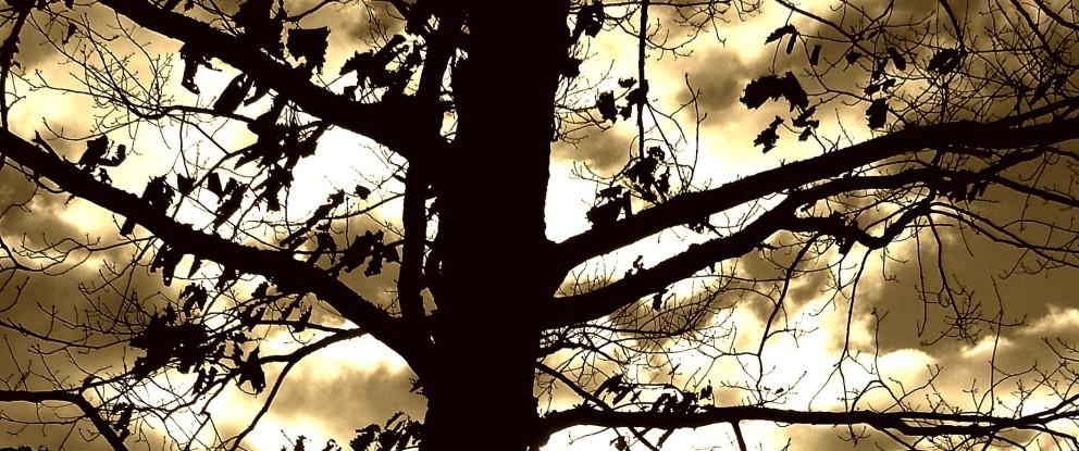 Dreamtime-header tree