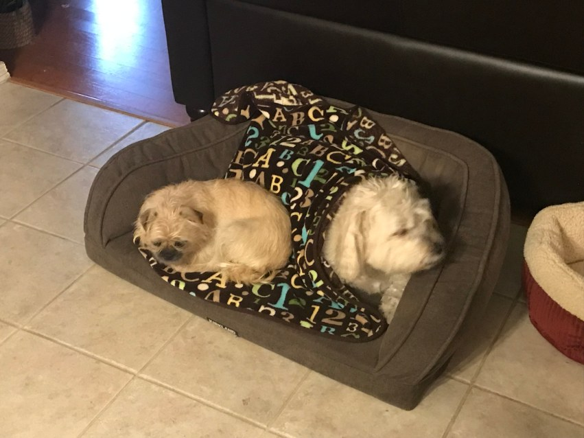shaggy&griffy in same bed