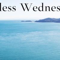 Wordless Wednesday*Fall Mum